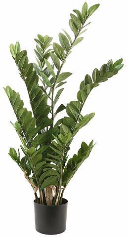 Dirbtinis augalas »Zamifolia«