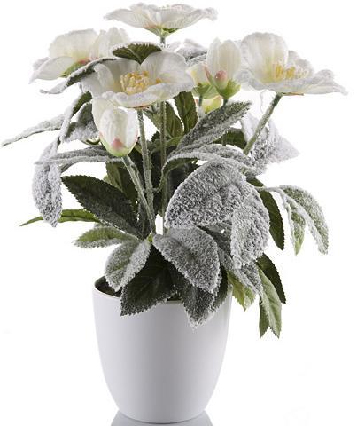 Dirbtinė gėlė »Christrose« lengvai bes...