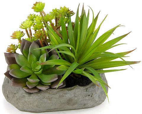 Dirbtinis augalas »Succulente« ant Ste...