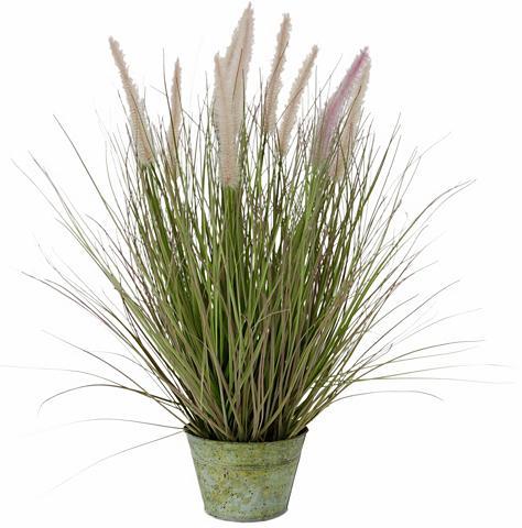 Dirbtinis augalas »Fuchsschwanzgras« i...