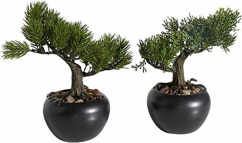 HOME AFFAIRE Dirbtinis augalas »Bonsai« (2 vnt. rin...