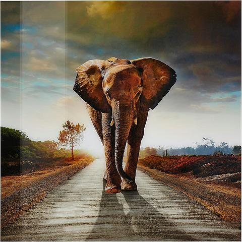 PREMIUM COLLECTION BY HOME AFFAIRE Paveikslas »Elefant« 100/100 cm