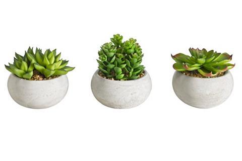 Dekoratyviniai kaktusai 3 vnt. rinkiny...