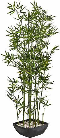 SCHNEIDER Dirbtinis augalas »Bambus«