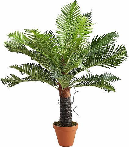 HOME AFFAIRE Dirbtinis augalas »Baumfarn«