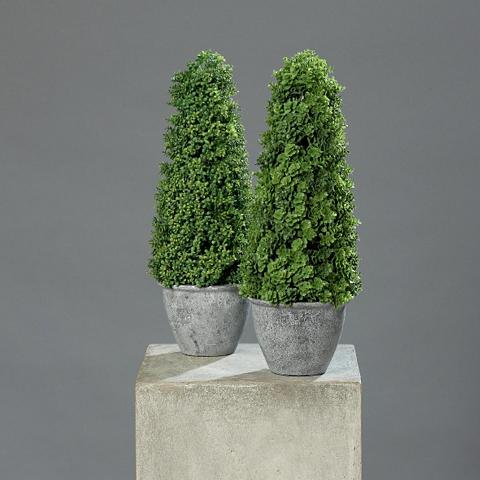 Dirbtinis augalas »Sedum-Kegel« (2 vnt...