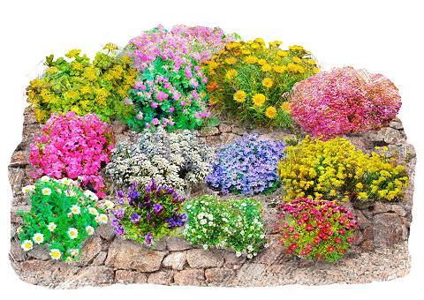 Beet & Balkonpflanze »Trockenmauer-Set...