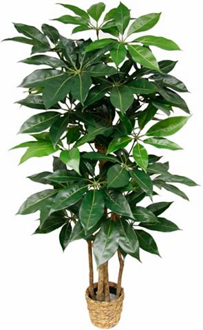 Dirbtinis augalas »Schefflera«