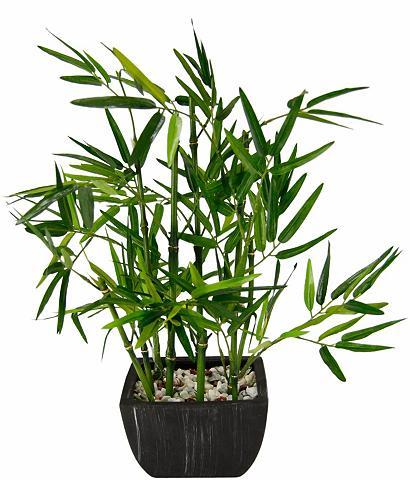 Dirbtinis augalas »Bambus« in Dubenėli...