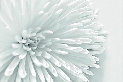 INOSIGN Paveikslas »White gėlė Heart« Blume