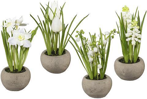 Frühlingsblumen im Zementtopf (4 vnt. ...