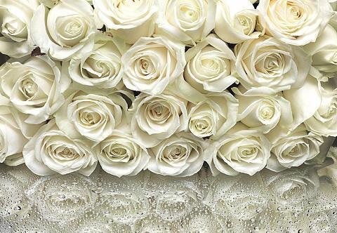 HOME AFFAIRE Fototapetas »A La Rose« 368/254 cm