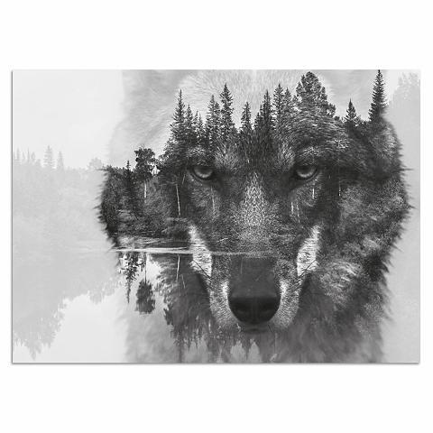 HOME AFFAIRE Paveikslas »Wolf« 60/40 cm