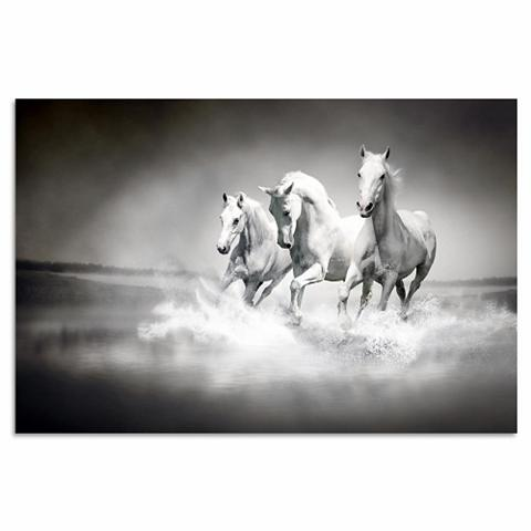 HOME AFFAIRE Paveikslas »Pferde« Tiermotiv