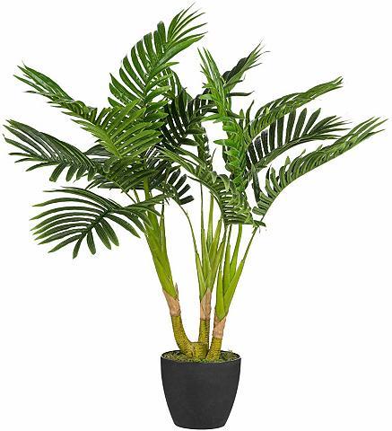 Dirbtinis augalas »Kentiapalme«