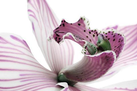 Paveikslas »Orchidee«