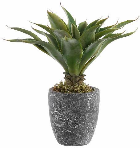 Dirbtinis augalas »Kaktus«