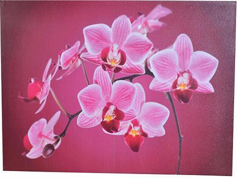 HOME AFFAIRE Paveikslas su LED lemputėmis »Orchidee...