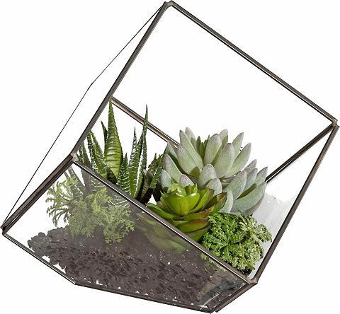 Deko Pflanze im Stiklinis kubas