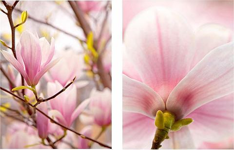 HOME AFFAIRE Paveikslas »Magnolien« (Set)