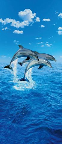 IDEALDECOR Durų tapetas »Three Dolphins« 2 vnt. r...
