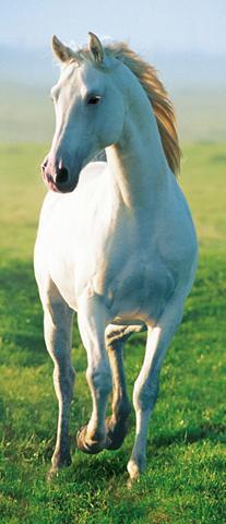 IDEALDECOR Durų tapetas »White Horse« 2 vnt. rink...