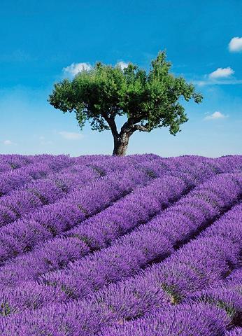 Fototapetas »Provence« 4 vienetai 183x...