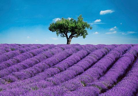 Fototapetas »Provence« 8-teilig 366x25...