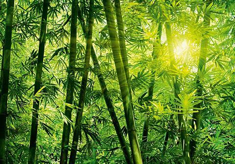 Fototapetas »Bamboo Forest« 8-teilig 3...