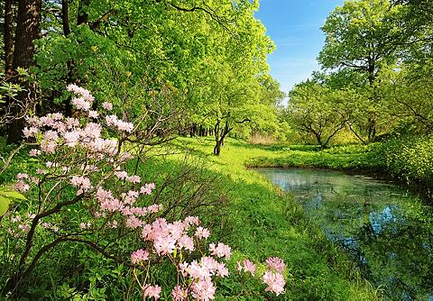 Fototapetas »Park in the Spring« 8-tei...
