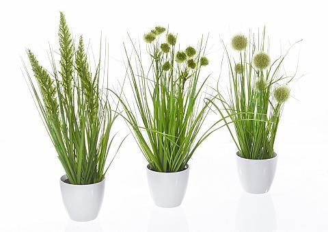 HOME AFFAIRE Dirbtinis augalas »Gras im Topf« (3er ...