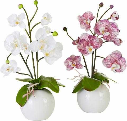 HOME AFFAIRE Dirbtinė gėlė »Orchidee« (2 vnt.)
