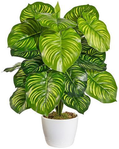 Dirbtinis augalas »Marantabusch« im Ke...