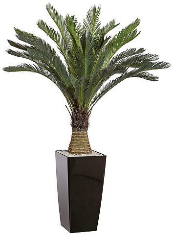 GASPER Dirbtinis augalas »Cycaspalme« im Kuns...