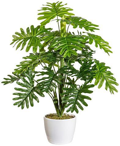 Dirbtinis augalas »Monsterabusch« im K...