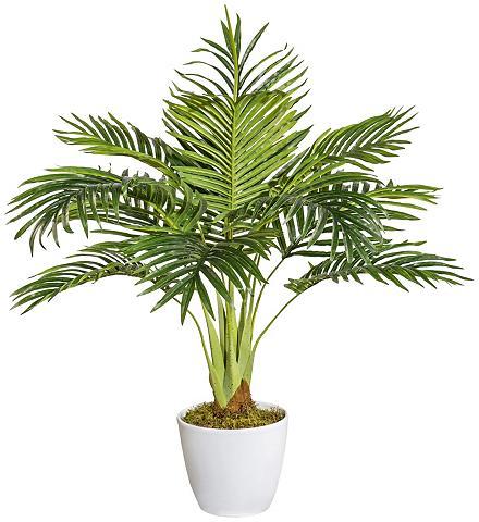 Dirbtinis augalas »Arecapalme « im Ker...