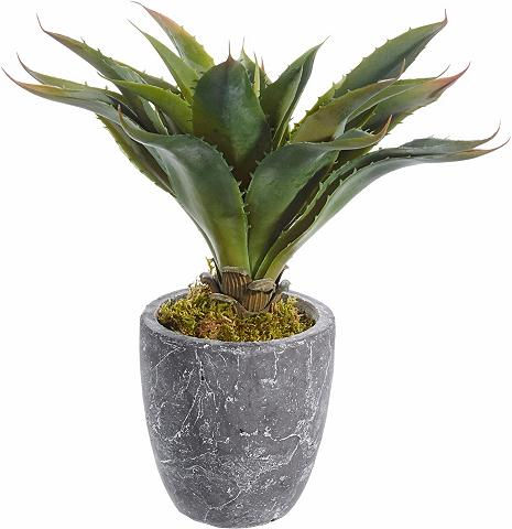 HOME AFFAIRE Dirbtinis augalas »Kaktus«