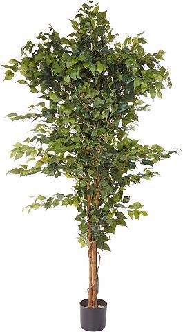 HOME AFFAIRE Dirbtinis augalas »Ficus Benjamini« in...