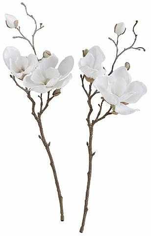 Dirbtinės magnolijos in gefrosteter Au...