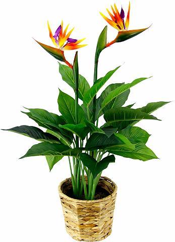 Dirbtinis augalas »Strelitzienpflanze ...