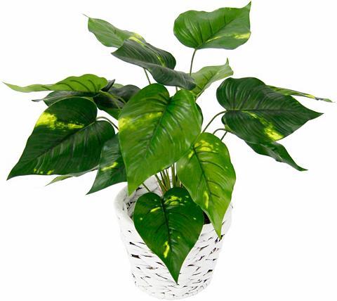 I.GE.A. Kunstpflanze »Pothospflanze in Wasserh...