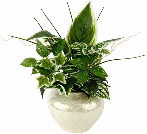Dirbtinis augalas »Mixed-Hostabusch in...