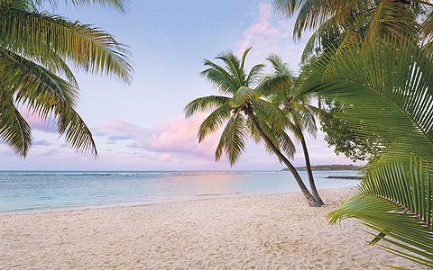 Vlies fototapetas »Paradise morning« 4...