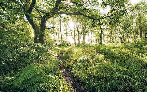 Vlies fototapetas »Mystic Path« 400/25...