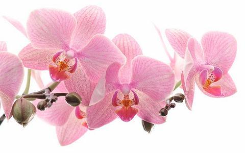 Fototapetas »Orchidee«