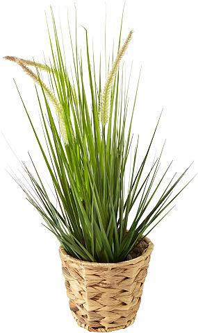 HOME AFFAIRE Dirbtinis augalas »Gras« im Kunststoff...