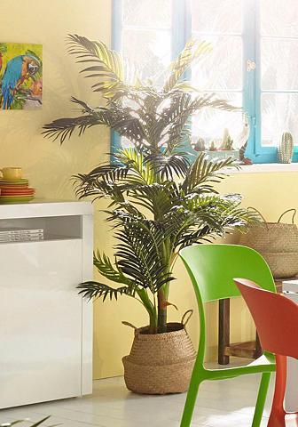 HOME AFFAIRE Dirbtinis augalas »Areca nolina Palme«...