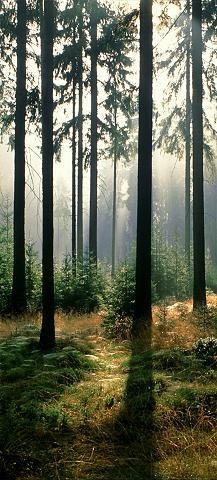 PAPERMOON Fototapetas »Forest - Türtapete« Blue ...