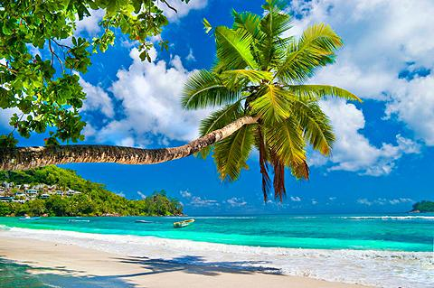 PAPERMOON Fototapetas »Seychelles Palm Beach« Vl...