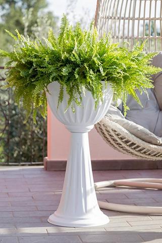 BAMA Vazonas »Alba« 43 cm skersmuo weiß